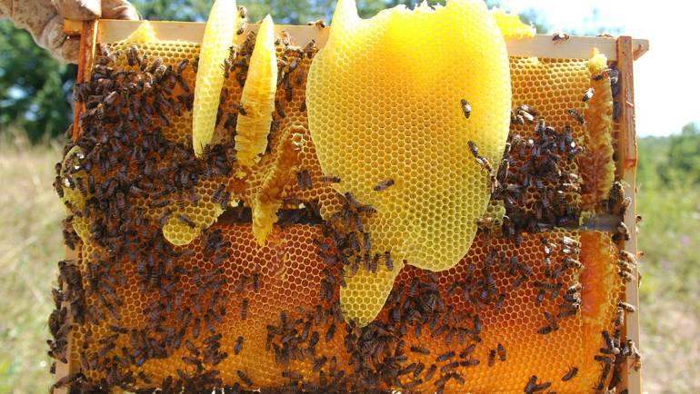 Cire d'abeille (Bee Wax)