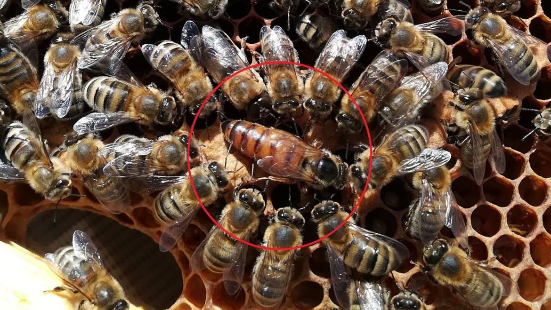 Données sur nos abeilles pour l'année 2018